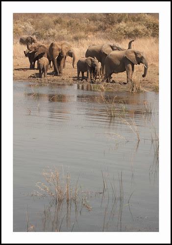 olifanten by hans van egdom