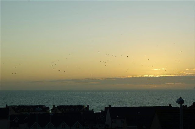 Sunset + birds