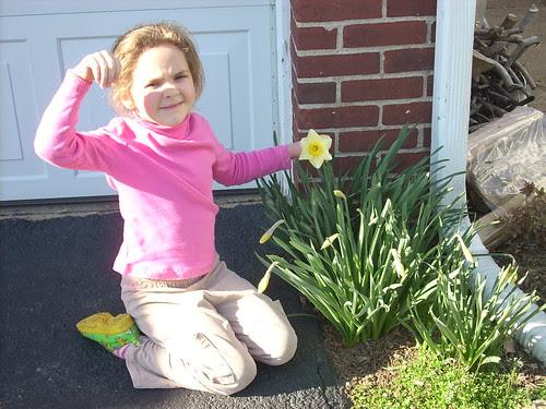 Willow daffodil