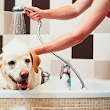 Love Your Pet, but Not His Scent? 6 Tips to Keep Your Apartment Smelling Fresh
