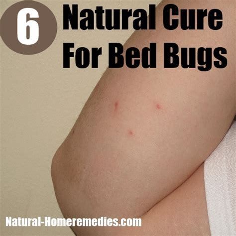 How quickly do bed bugs reproduce, eliminate bed bugs completely, how to kill carpenter ants in