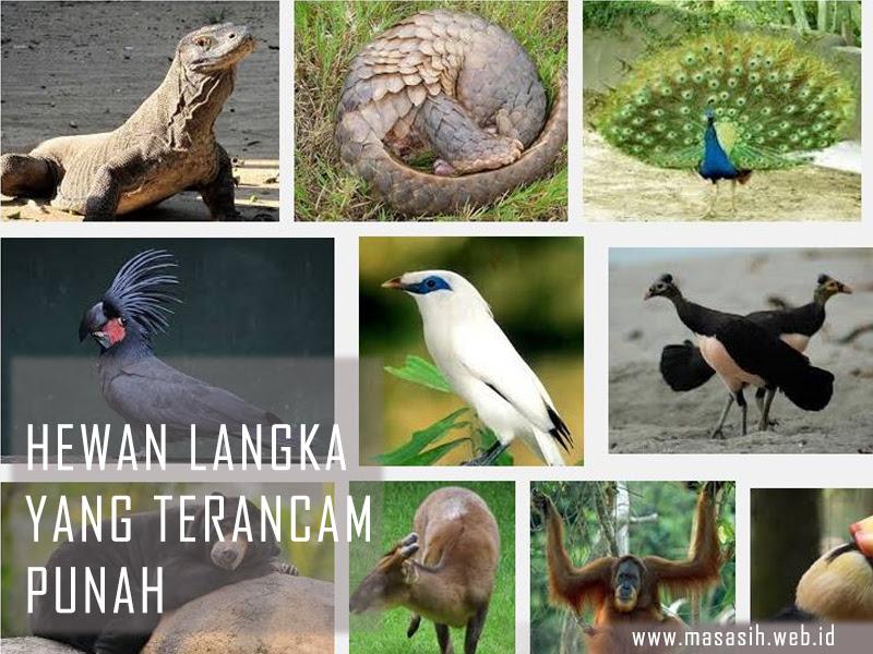 4700 Nama Dan Gambar Hewan Langkah Di Indonesia Gratis Terbaru