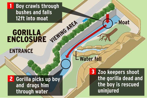 Cincinnati Zoo Gorilla enclosure graphic