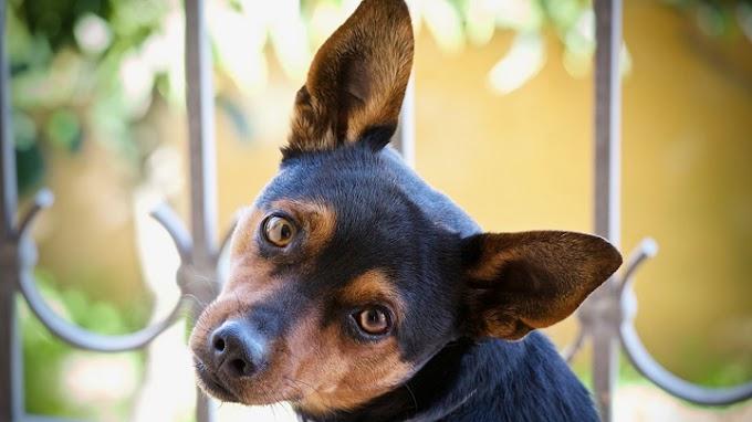 Los significados de la mirada del perro