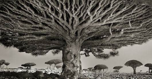 Ancient Trees: Woman Spends 14 Years Photographing World's Oldest Trees