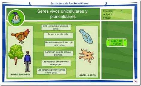 Seres unicelulares y pluricelulares