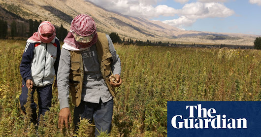 Budding business: how cannabis could transform Lebanon | World news | The Guardian