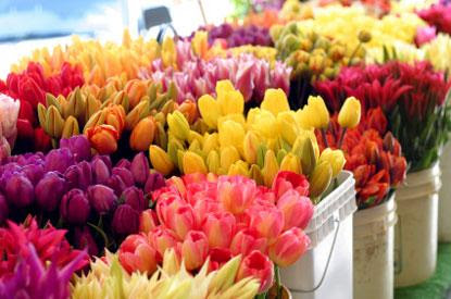 wholesale flowers wedding