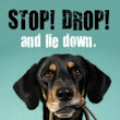 Loose Dog? Don't chase! Stop, Drop and Lie Down