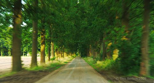 speeding home