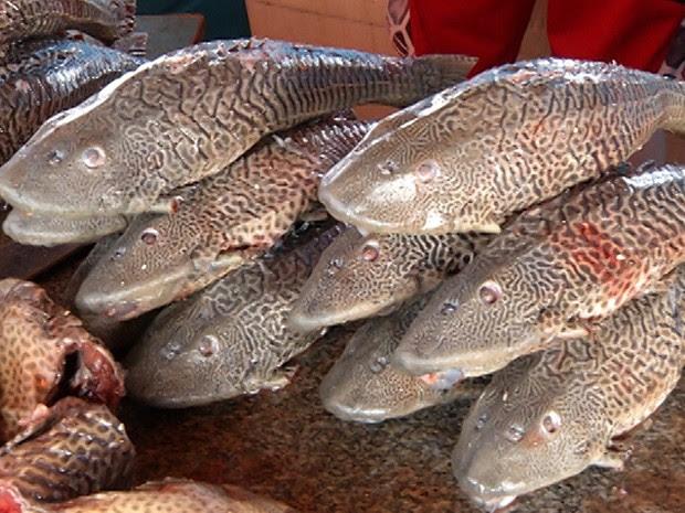 Só poderão ser vendidos peixes que são criados em viveiros  (Foto: Reprodução/TV Tapajós)