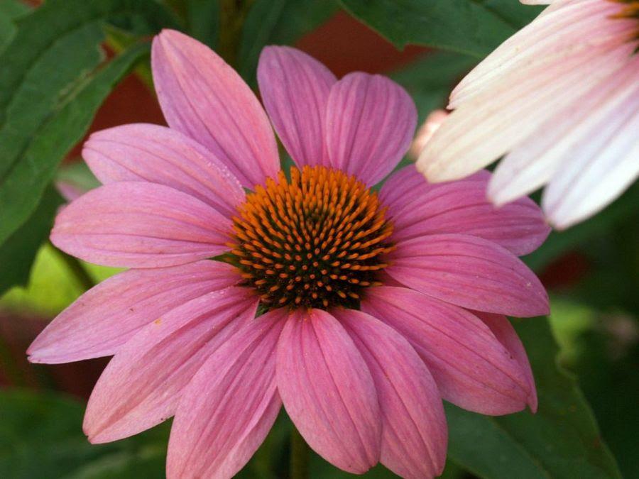 Partes De Una Flor Plantas