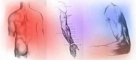Kinesiology - A Thorough Explanation