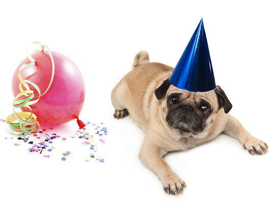 8 New Year's Don'ts For Your Pet