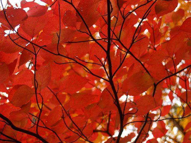 Fall colors detail