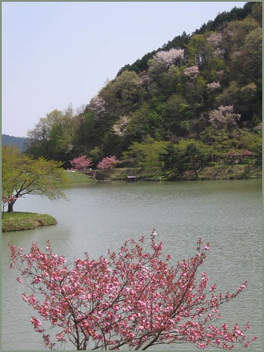 011 blossoms and lake
