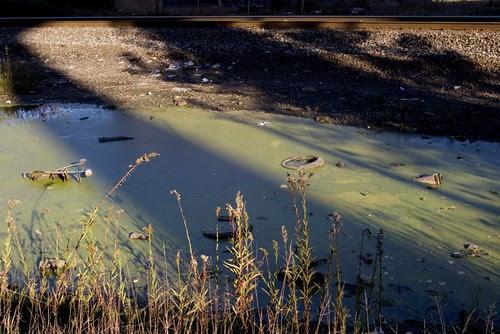 pond scum light and shade.jpg