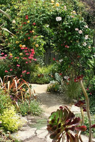 rose geranium arbor