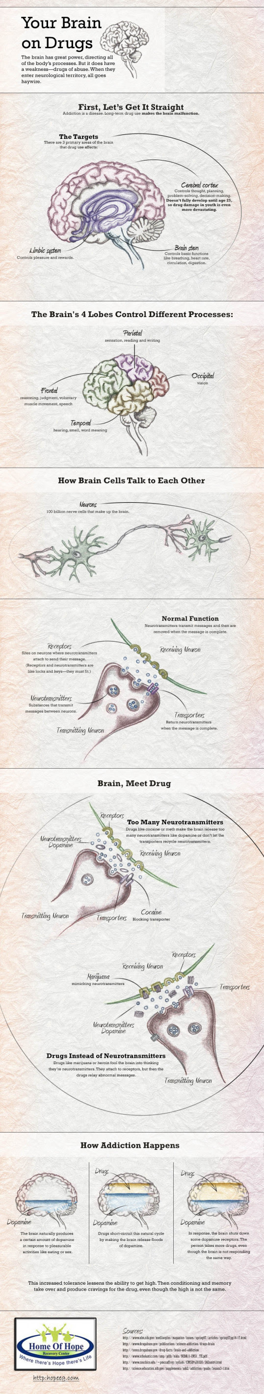 how drugs affect the brain