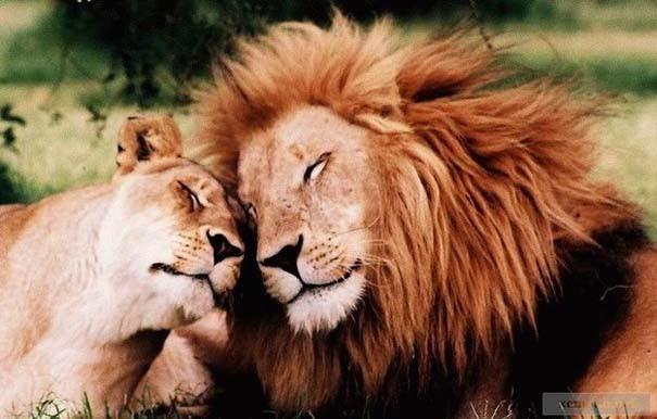 «Κολλητάρια» του ζωικού βασιλείου (6)