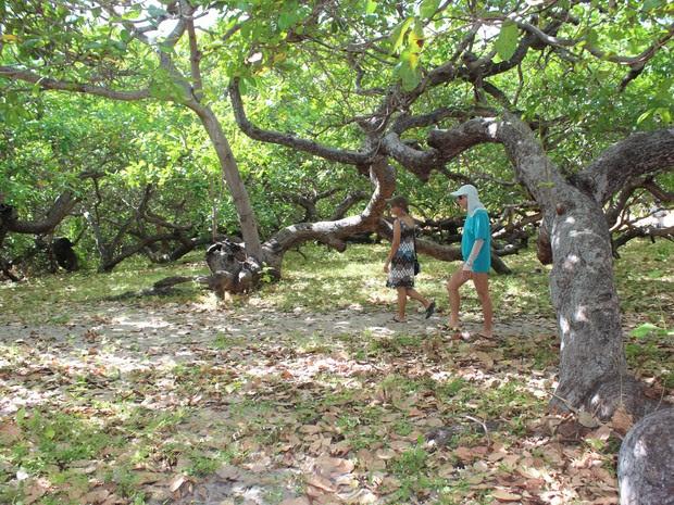 Turistas visitam cajueiro do Piauí (Foto: Gilcilene Araújo/G1)