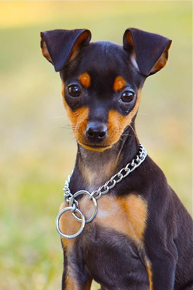 Pin by Dog Breeds on