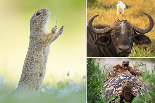 Hilarious pictures from Comedy Wildlife Photography Awards shows lighter side of natural world