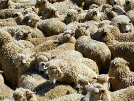 oi in turma de oi c multa lana