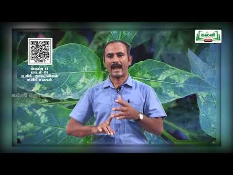 11th Bio Botany உயிரின உலகின் வகைப்பாடு பாடம் 1 பகுதி 2 Kalvi TV