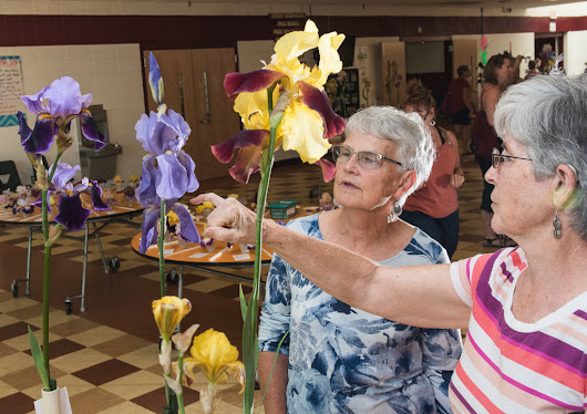 Iris show a blooming good time - Lewiston Sun Journal