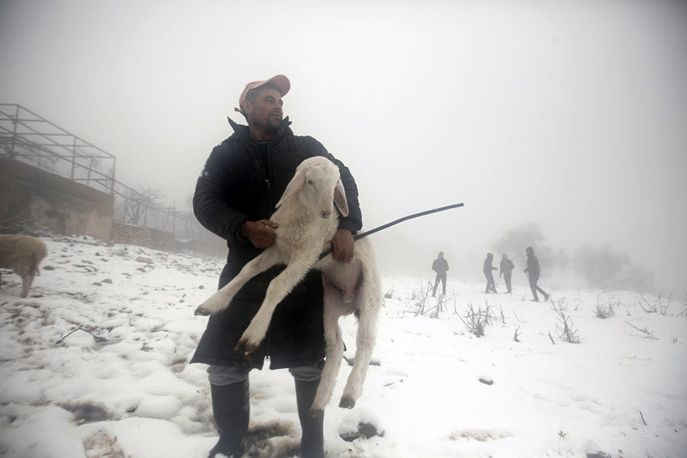 A Palestinian man carries a sheep on a farm during snowy weather on Mount Gerizim, near the West Bank city of Nablus. (JAAFAR ASHTIYEH/AFP/Getty Images)