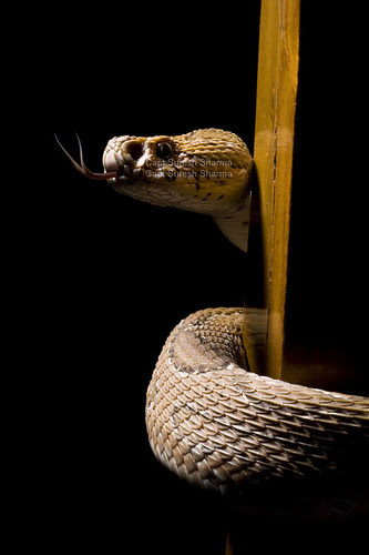After a Long Wait, Russells' Viper Ablazes the Ramp Under Our Elinchrom... by Captain Suresh