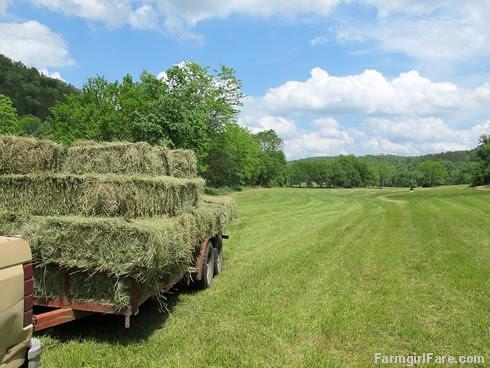 (28-20) Heading for the haybarn - FarmgirlFare.com