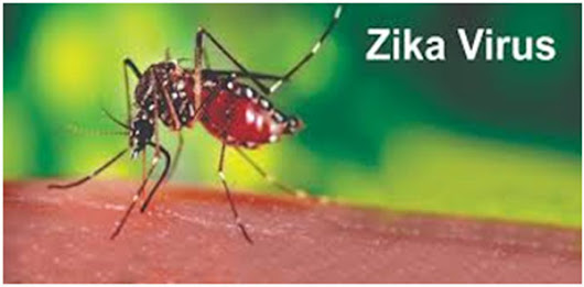 Zika Virus Fever : Signs and Symptoms,Treatment