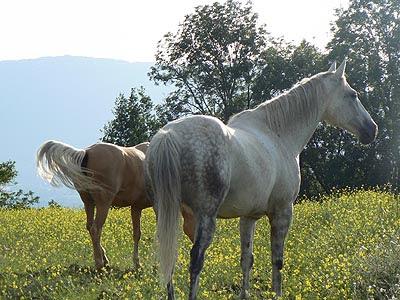 chevaux dans le pré.jpg