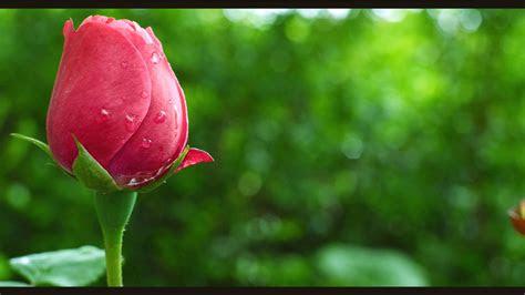 gambar cantik walpeper gambarrrrrrr