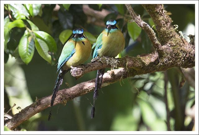 Monteverde Bird 2
