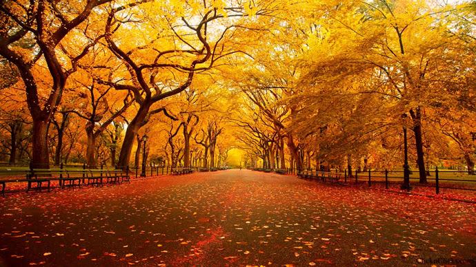 """Résultat de recherche d'images pour """"new york automne"""""""