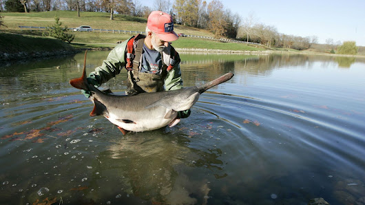 Why the Caviar-Producing American Paddlefish Is a Symbol of Luxury and Scarcity