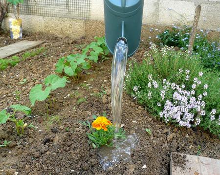 le_p_tit_jardin_2