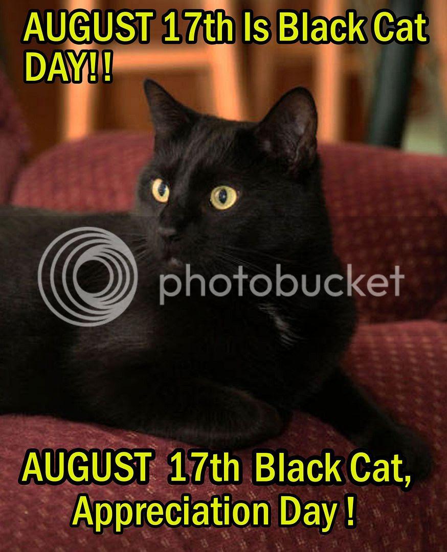 Black Cat Appreciation Day!
