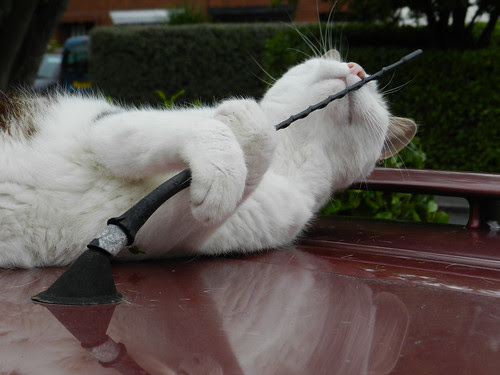 Oimo playing with the car
