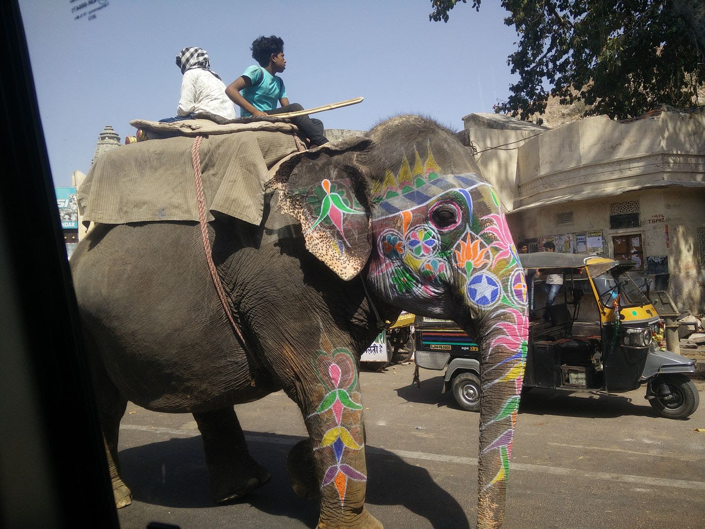 Elephant in Jaipur photo IMG_20150509_145510_zpsf7jrnht6.jpg