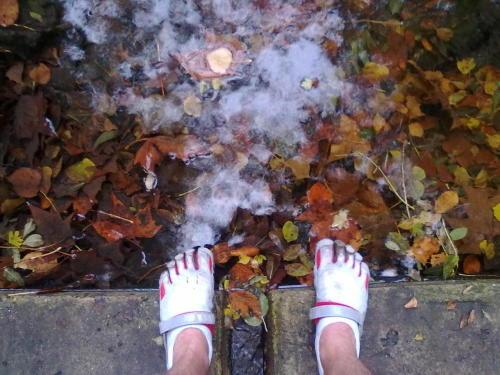 at the ponds edge, bikila's, autumn, trail running, euphoria.