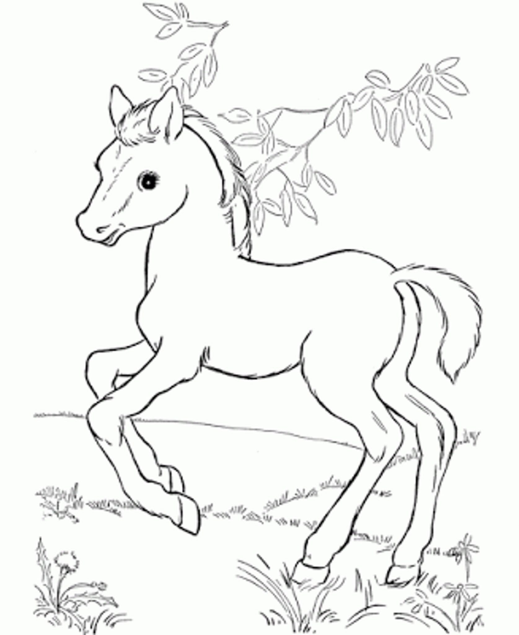 Baby Horse Drawing at GetDrawings | Free download