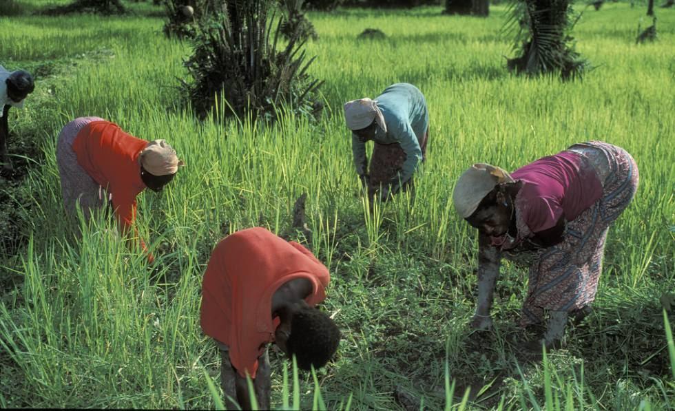 Un grupo de mujeres trabaja la tierra en Ghana.