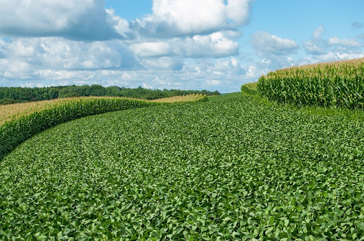 Mono-Cropping with Government Subsidized Soy and Corn a Threat to Health and the Environment