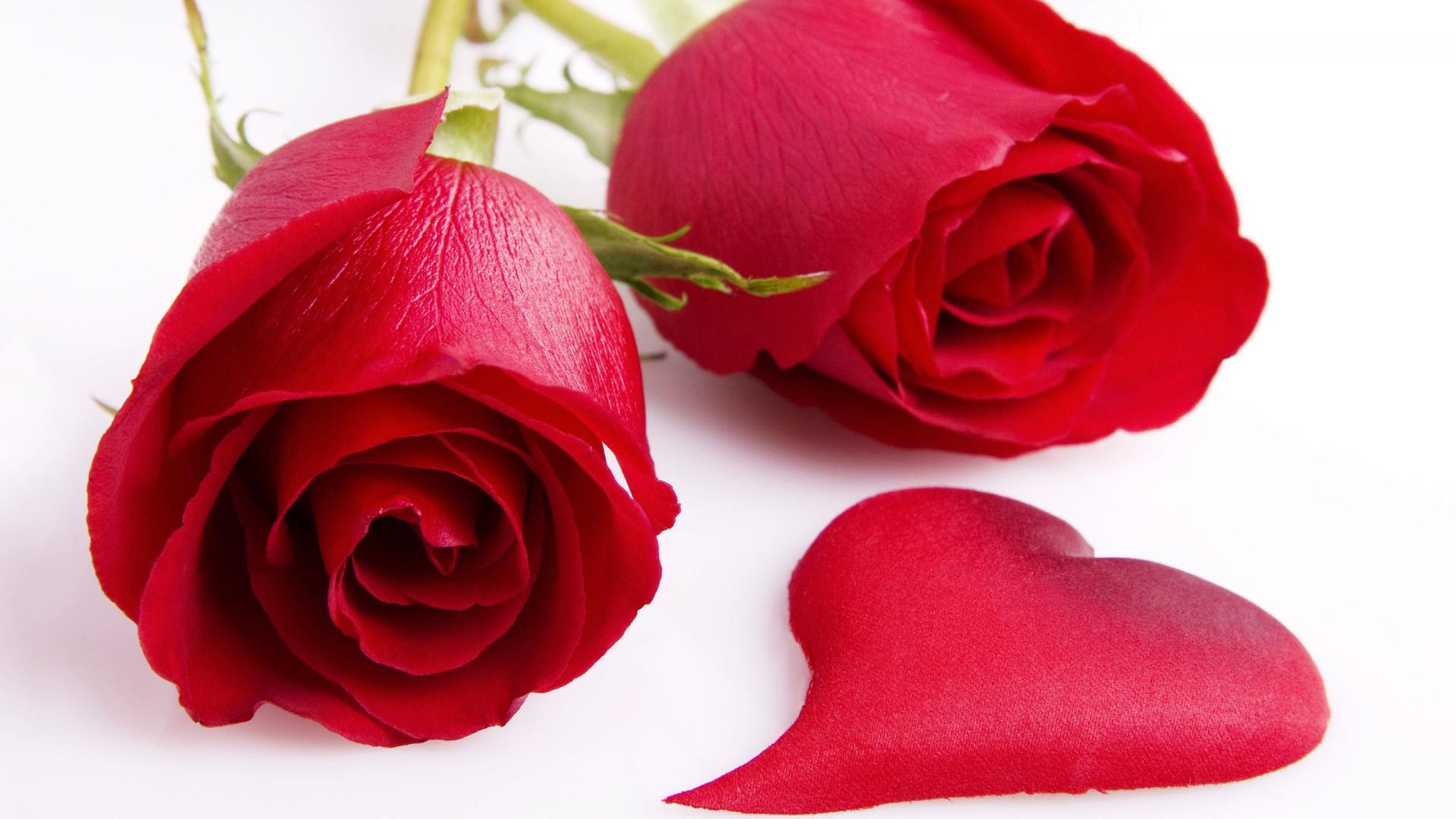 Red Rose Wallpapers Free Download Sf Wallpaper
