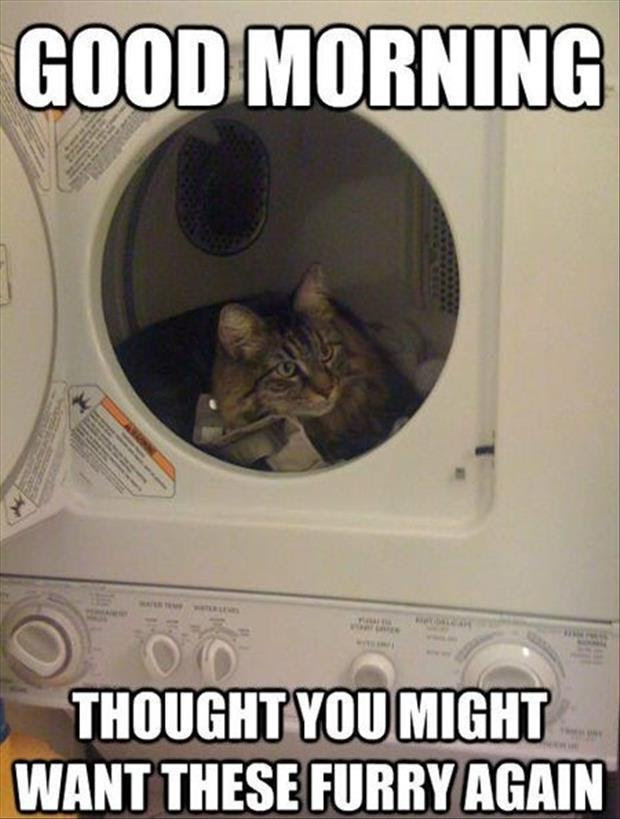 Funny Animals Of The Day 21 Pics