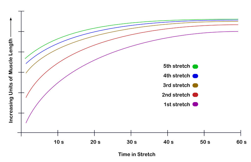 muscle stretching vs time